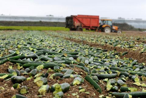 Das tut Nestlé gegen Lebensmittelverschwendung
