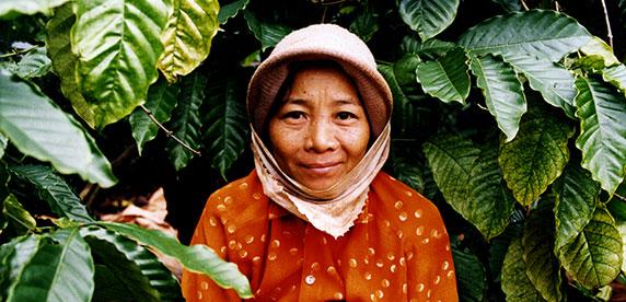 Wasser sparen auf Vietnams Kaffeefeldern